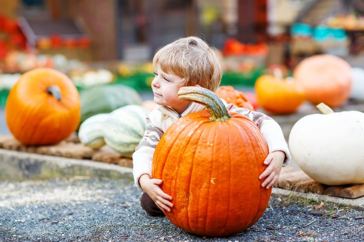 The best corn mazes and pumpkin patches in Denver, Boulder and the surrounding communities. List includes hours, prices and how to save.
