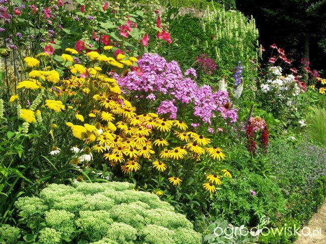 O....! - strona 479 - Forum ogrodnicze - Ogrodowisko
