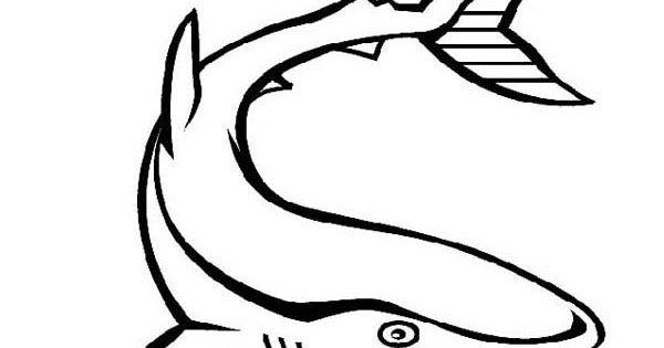 Mewarnai Gambar Ikan Hiu Hitam Putih Izarnazar Gambar Ikan Hiu Untuk Mewarnai Download Berbagai Macam Gambar Ikan Air La Peace Gesture Peace Okay Gesture