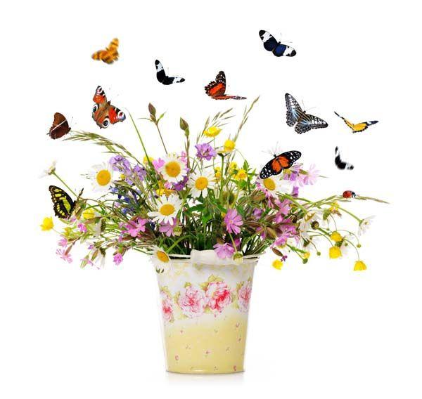 Цветы : 2055