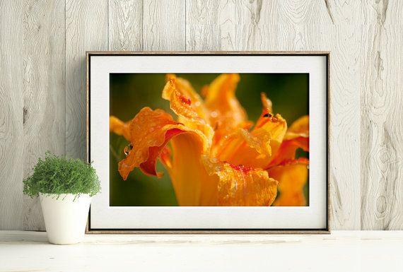Tiger lily under a warm summer rain, printable orange flower by PlayfulPixieStudio #macrophotograph #tigerlily #waterdrops #printable