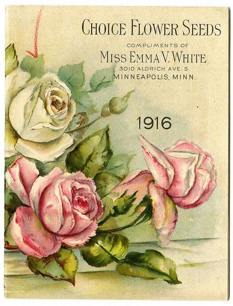 "Beautiful pink and white roses decorate the front cover of Miss Emma V. White's 1916 catalog. Emma V. White called herself the ""North Star Seedswoman"" and had her first mailing in 1896. She produced catalogs with colorful, hand painted covers aimed at woman customers."