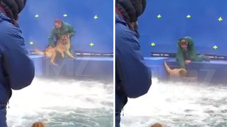 """One of the dogs in """"A Dog's Purpose"""" resisted filming a risky scene, but was forced into rushing water."""