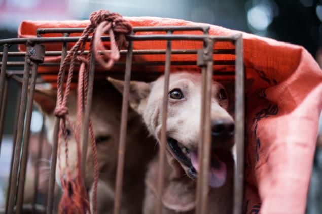 Our outrage over China's Yulin dog meat festival exposes a disgusting hypocrisy