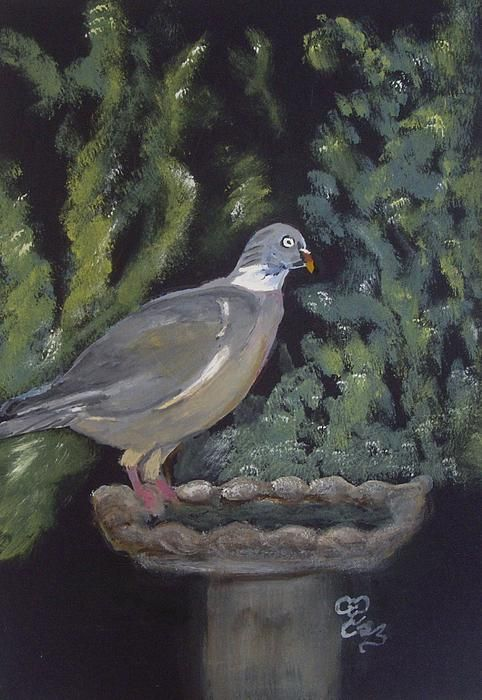 Daniels, watercolour. A frequent visitor to our garden, named after the character in 'An officer and a gentleman'...'Give us the thumbs up, Daniels'