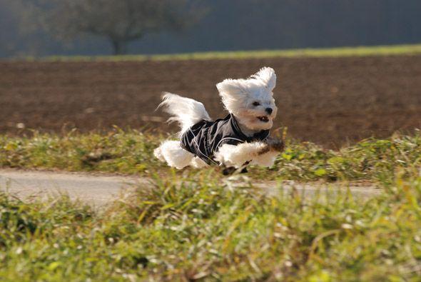 Durch Winter Perfekte – Passform Hundemantel W2ID9EH