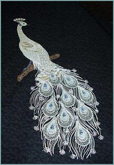 White Peacock... beautiful