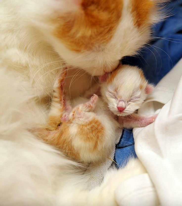 Mommy Lovely Kittens Cutest Cute Cats Pretty Cats