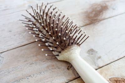 Para retirar los pelos atorados, córtalos con tijeras y pasa un cepillo de dientes entre las cerdas.