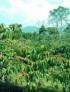 Jolong, Keelokan Kebun Kopi Dipadu Dengan Bumi Perkemahan Yang Representatif | Patinews.com