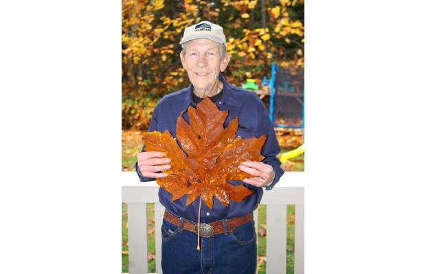 Could a Vancouver Island maple leaf be a world record?