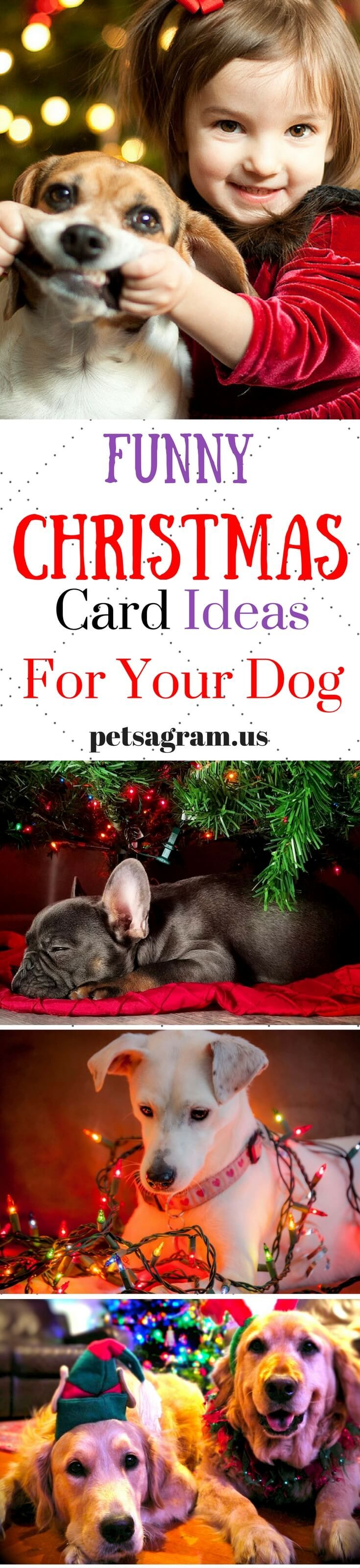 22 best winter dog ideas images on pinterest your pet dog
