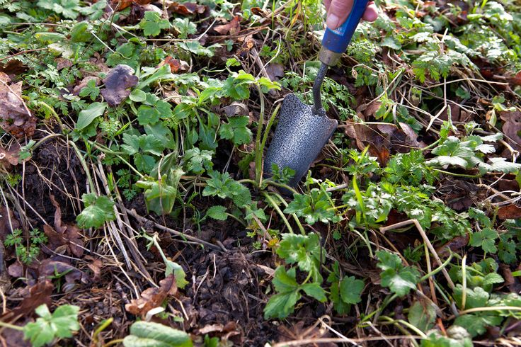 how to get rid of clover in your lawn organically