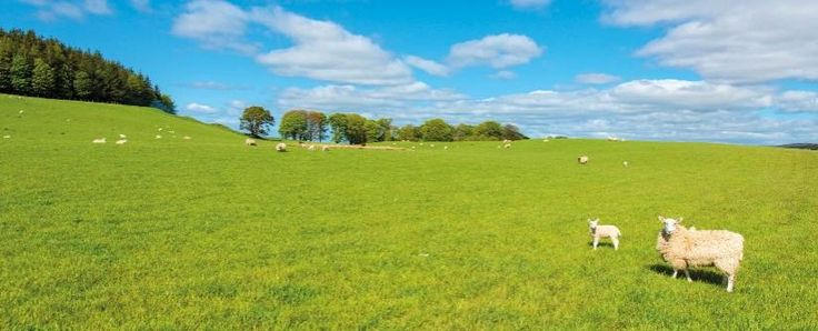 A right Royal selection of farms on Show | CKD Galbraith | 18 June 2015 | This week we'll be out in force at the Royal Highland Show - Scotland's annual celebration of farming and the countryside - held at Ingliston, Edinburgh from Thursday to Sunday (18-21 June 2015.) To mark the show we take a whistle-stop tour to feature just a few of the farms we are currently offering for sale.