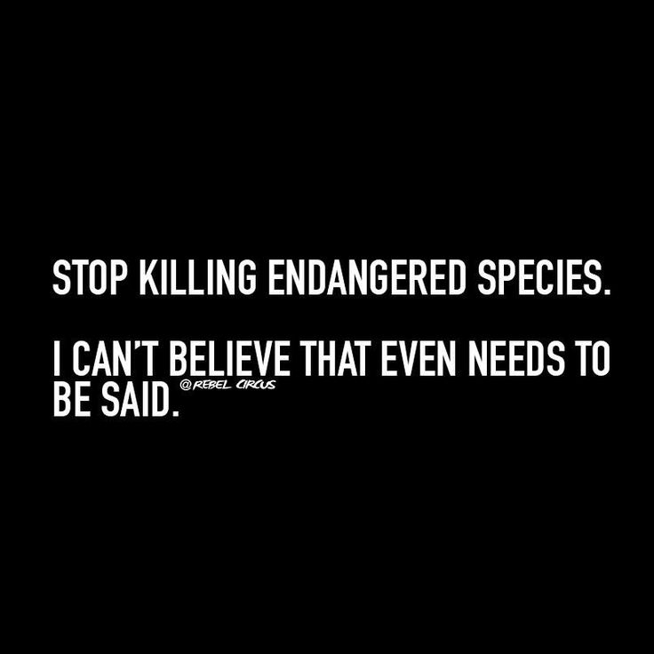 endangered species what is killing them essay Poverty is a huge motivator in driving individuals who live amongst these endangered species to hunt and kill them for one response to persuasion essay draft.
