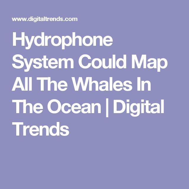 Hydrophone System Could Map All The Whales In The Ocean | Digital Trends