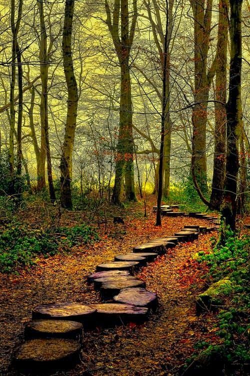 Forest Trail, Westonbirt Woods, England....we could make this path in our woods