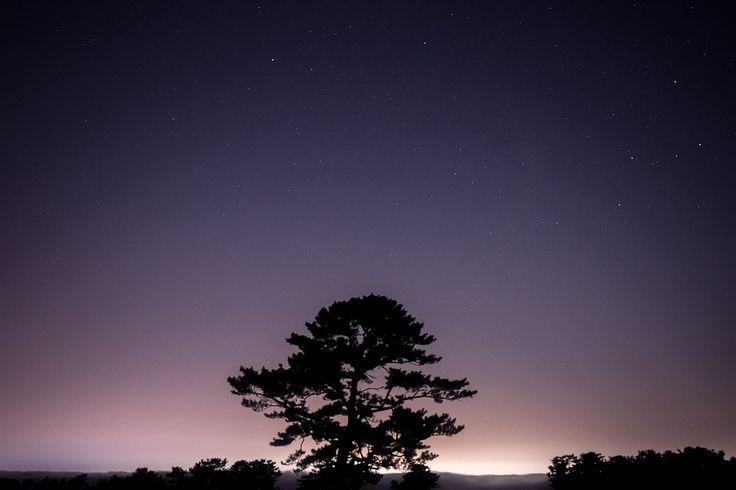 Roślin, Charakter, Drzewo, Conifere, Zachód Słońca