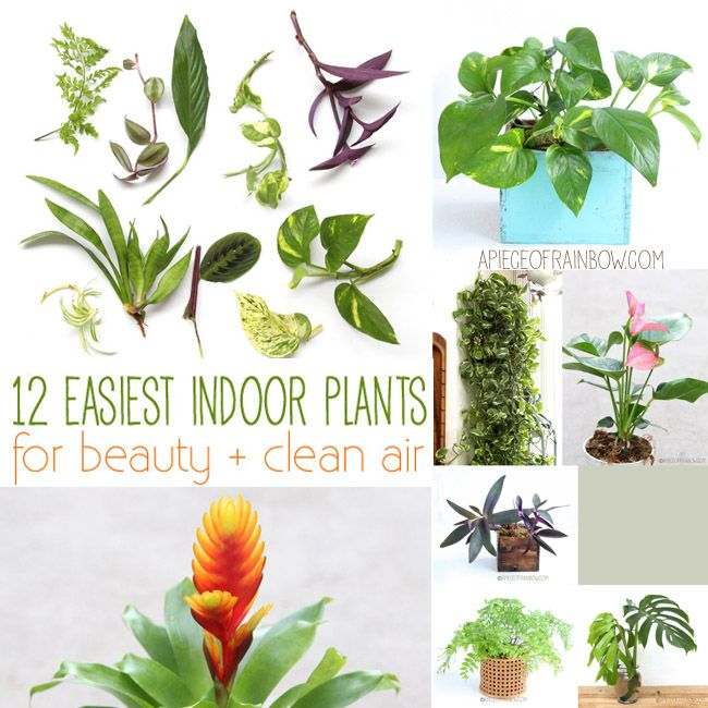 IMPOSSIBLE to kill... 12 easiest indoor plants that also purify air | A Piece of Rainbow