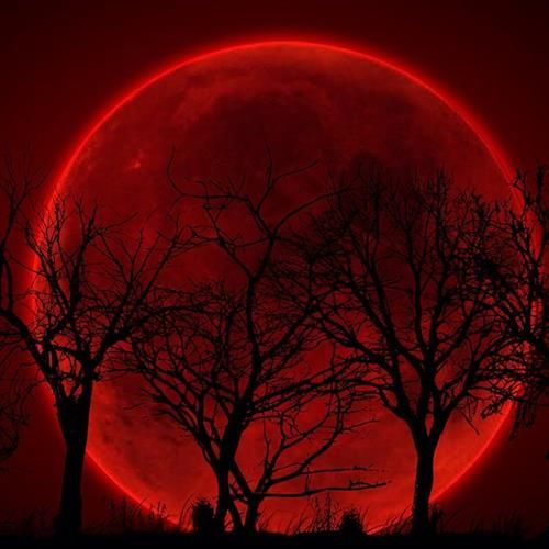 Red blood Moon Lunar Eclipse behind trees