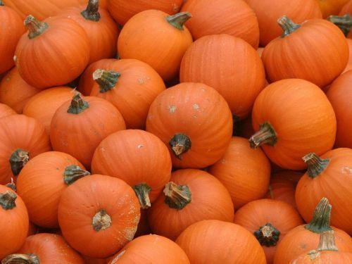 Tons of pumpkin recipies for fall!Pumpkin Recipes, Peas Kitchens, Pumpkin Treats, Pumpkinroundup, Fall, Pumpkin Masks, Pumpkin Roundup, Sweets Peas, Things Pumpkin