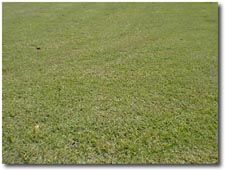 how to add grass seed to existing lawn