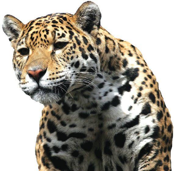 Leopard Wall Decor leopard wall hakkında pinterest'teki en iyi 10+ fikir