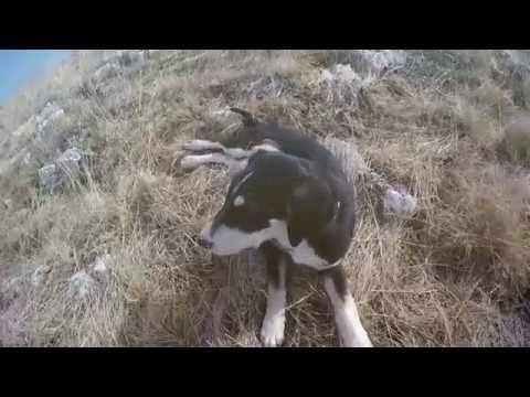 Nature Calling (GoPro Video) #TravelandExplore 2