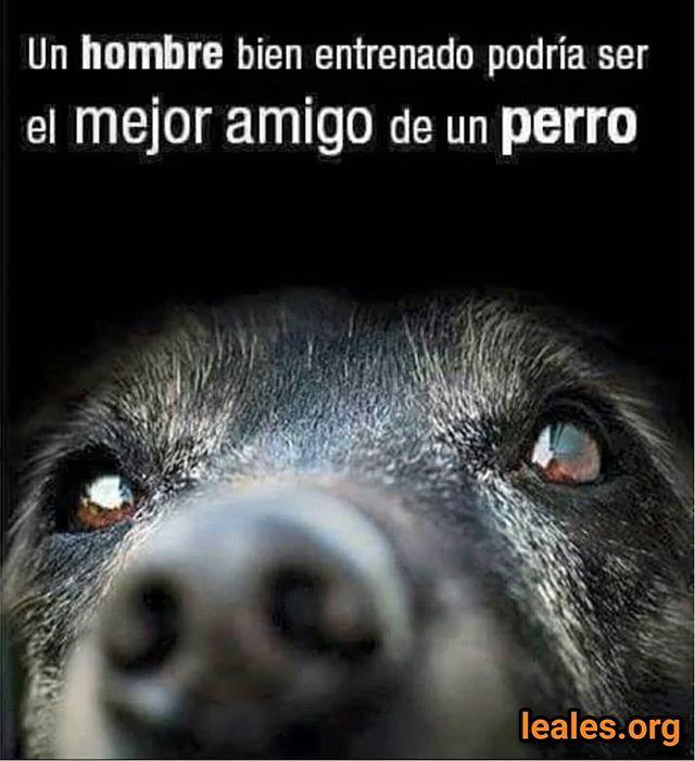 Leales Org Tu Guia Animable Busca O Difunde Animales Perdidos O Encontrados En Acogida Temporal O Adopcion Perm Perros Frases Amantes De Perros Amo Los Perros