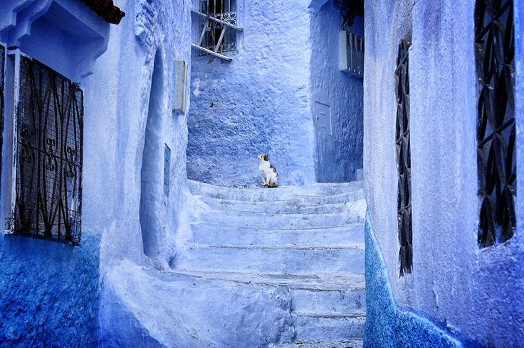 This Old Town In Morocco Is Covered In Blue Paint - Bored Panda