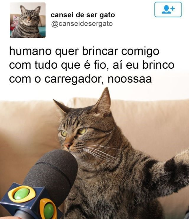 18 quejas muy graciosas del gato que conquistó internet