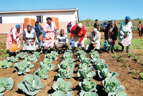 GreenMatter Senior Fellow, Prof. Albert Modi, leads a hands-on research project with the participation of the rural community of Umbumbulu in KwaZulu-Natal.