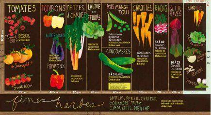 Plan de potager pour un premier jardin. Publié dans La Presse, Pierre Gingras.