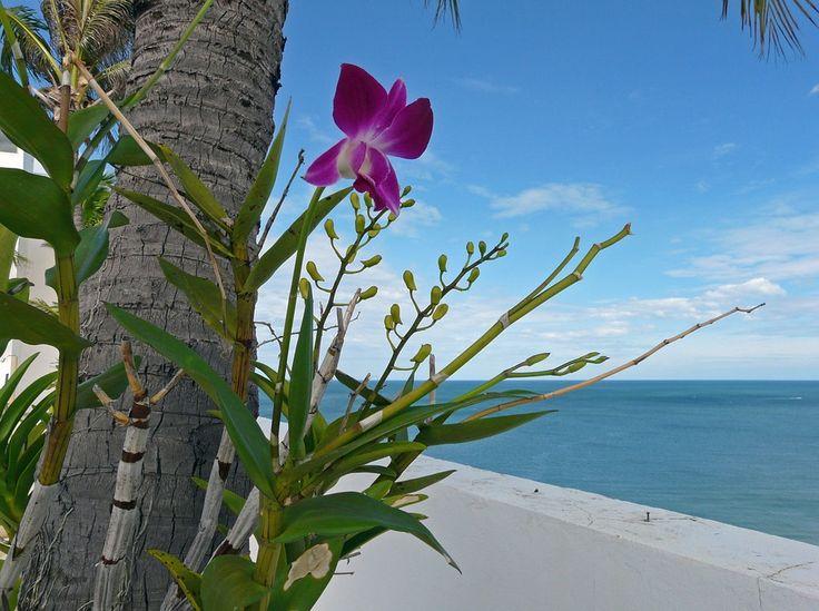 Orchideje, Květiny, Tropické, Asie, Thajsko, Rostlin