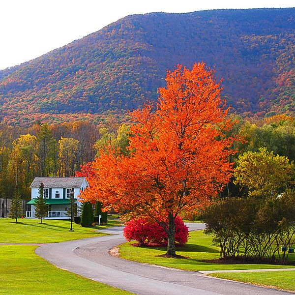 Autumn foliage at Mt. Equinox, Manchester, VT.