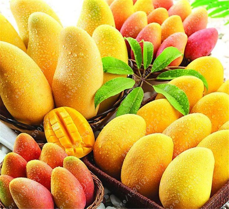 2 pcs/bag mango seeds,mini mango tree seeds,bonsai tree seed,Organic fruits and vegetables seeds,pot for home garden planting