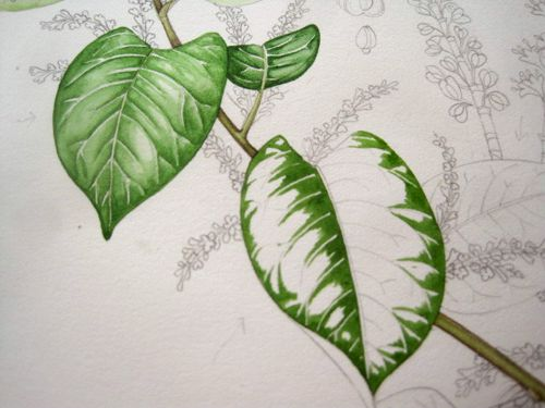 Lizzie Harper watercolour step 2 in painting a leaf                                                                                                                                                                                 More