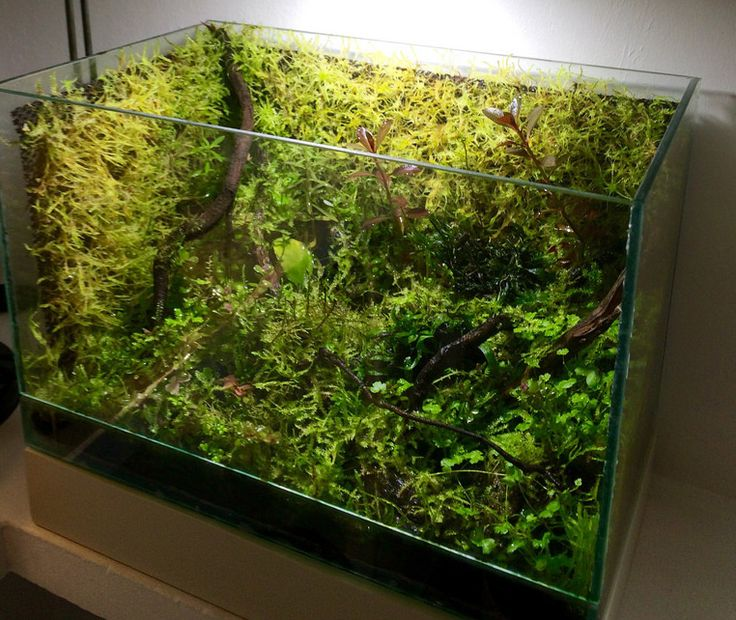 3861 Best Aquascaping Aquarium Images On Pinterest