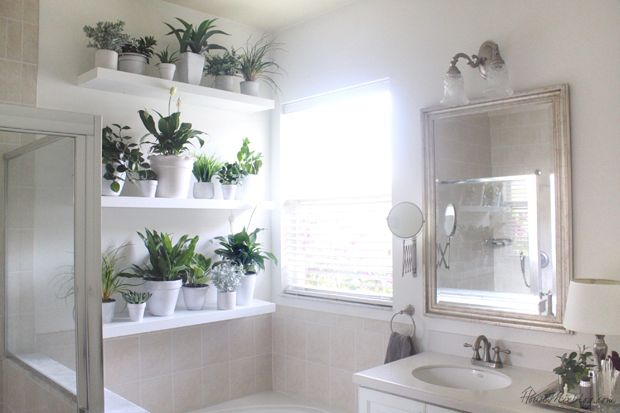 Plant wall in the bathroom