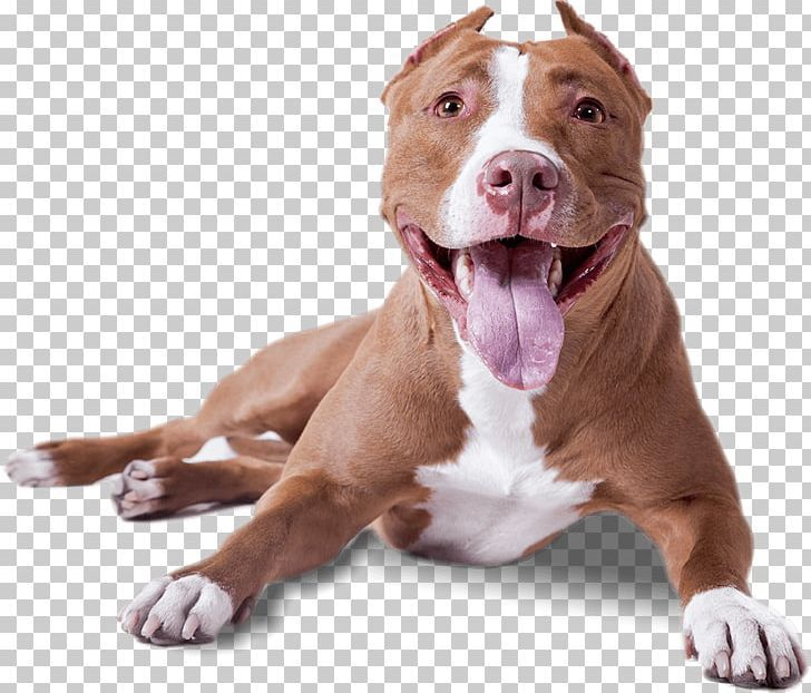 Dogs Png Dogs Dogs Png Pitbulls