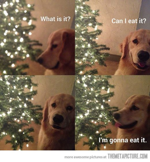 Haha just like my dog