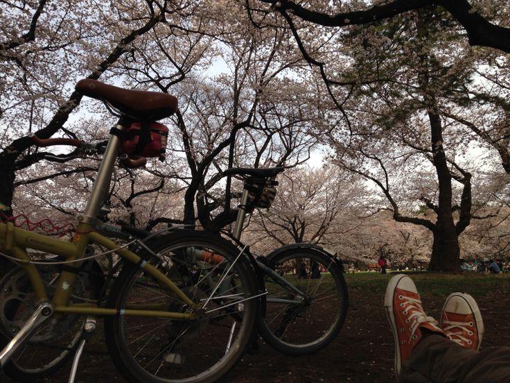 Copyright © オレンジメガネ 様 / 2009年と2012年 ボードウォークD7 / 小金井公園にてお花見ポタリング 桜と自転車見ながらお昼寝中です(笑)