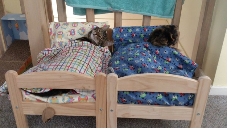 Cats in their little IKEA beds. This is tooooo cute!