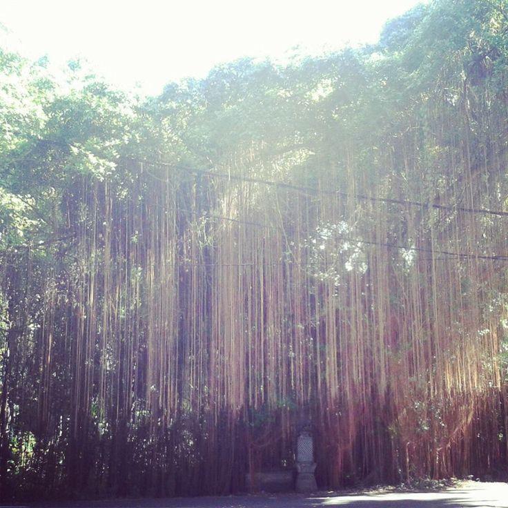 Wondertree - Bali, Indonesia