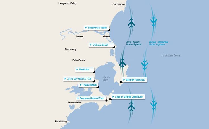 Best places to see whales in NSW - Image of Shoalhaven Whale watching map