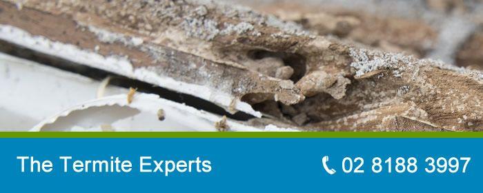 termite-controls-sydney-nsw