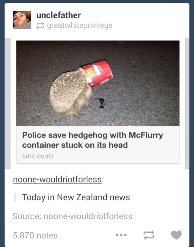 On the intensity of the news in New Zealand: | 19 Times New Zealanders Totally Nailed It On Tumblr