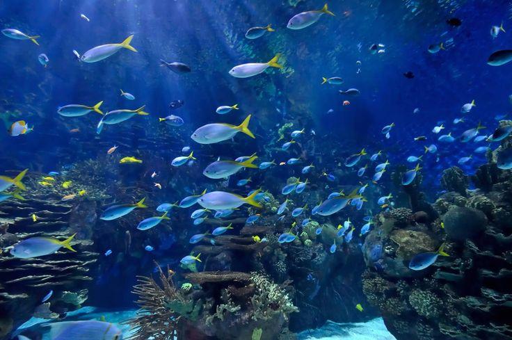 Research Aquariums