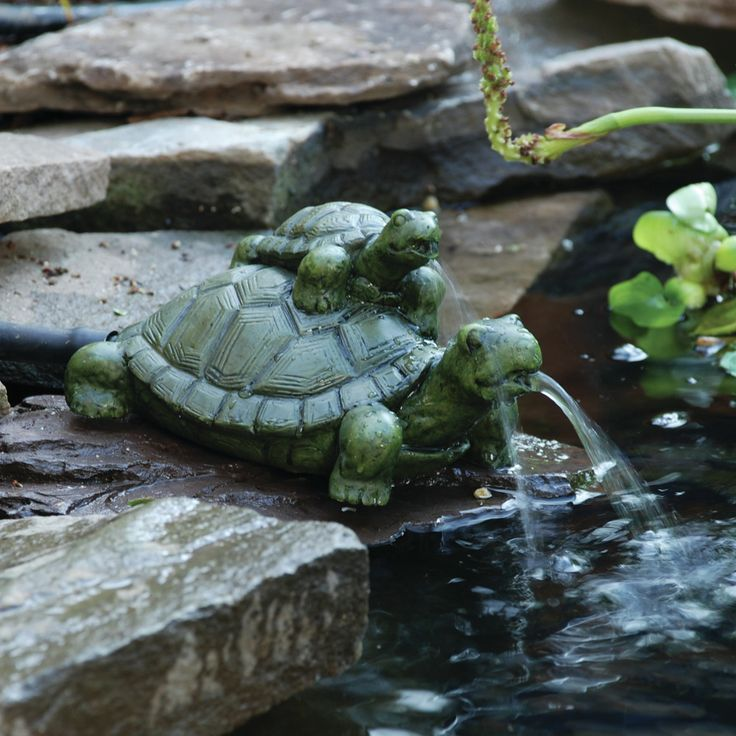 pond boss? Turtle Baby with Mama Spitter Home - Outside Pinterest