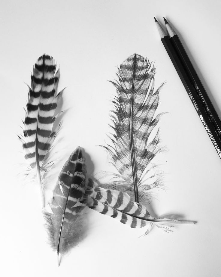 The 25+ Best Pencil Sketches Of Nature Ideas On Pinterest